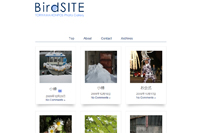BirdSITE